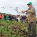 Tegueste organiza una ruta enohistórica por bodegas y viñedos de la Villa
